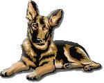 Pour la partie Canine - Association Elly (Salon de Provence 13300)